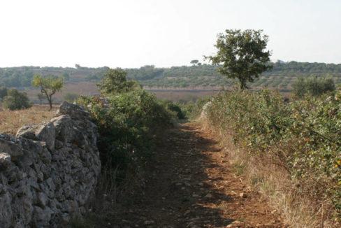 Mazzagalline_041